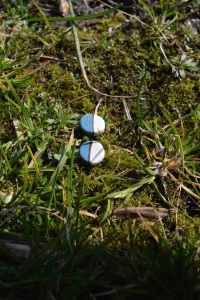 geometrische oorbellen stekers rond uit porselein- Clayandmore